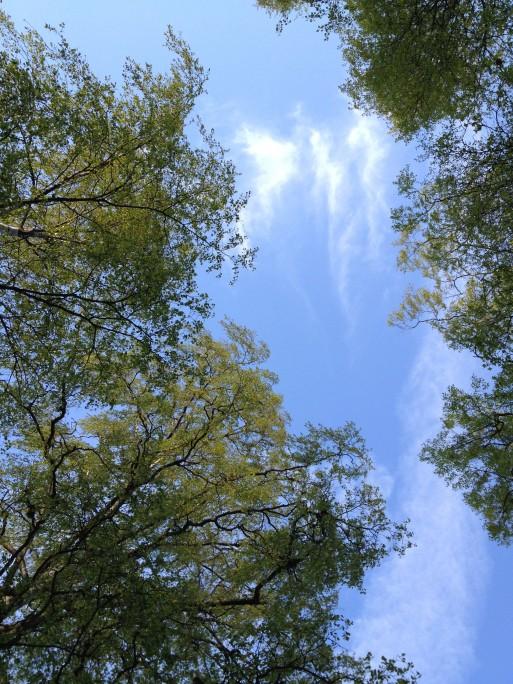Friheten du føler ved å ligge på ryggen i Birkelunden, og se opp på en blå himmel og bjørkeblader som springer ut kan nesten ikke beskrives... #denfølelsen