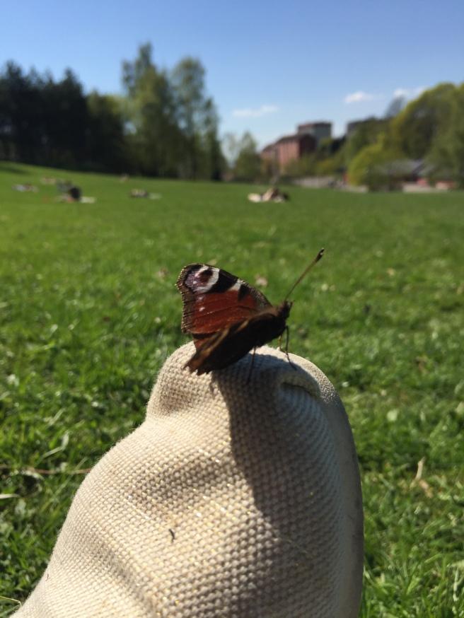 Fikk hyggelig besøk i på piknik i Torshovdalen.